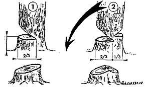 comment abattre un arbre id es d coration id es d coration. Black Bedroom Furniture Sets. Home Design Ideas
